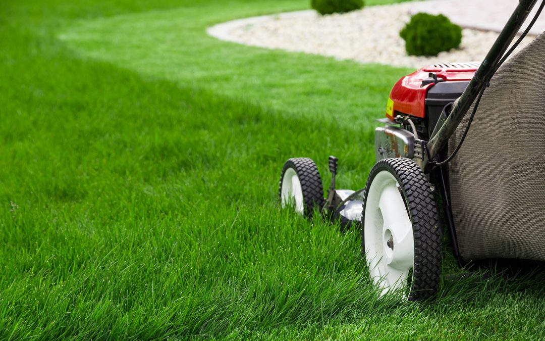 maintain a perfect lawn